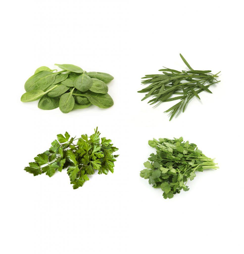 Spinach, Tarragon, Parsley, Coriander