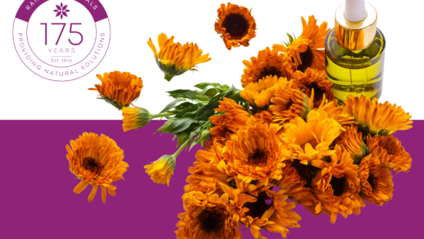 Arnica – background, uses and forms
